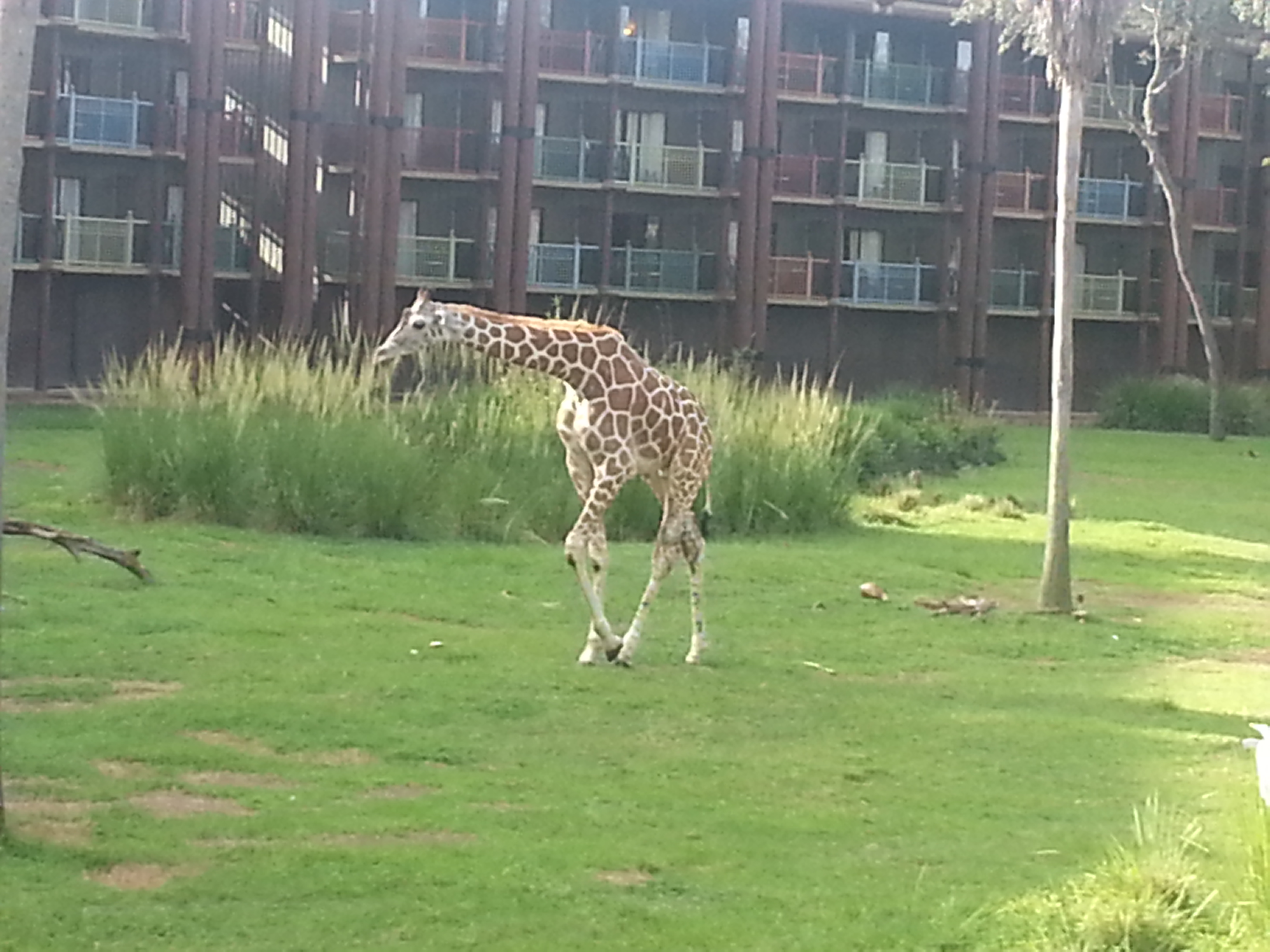 Thrifty Thursday:  Animal Kingdom Lodge ~ Free and Almost Free Activities