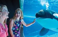 SWF-Shamu-underwater-viewing-200x128